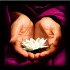Lotus in Hands